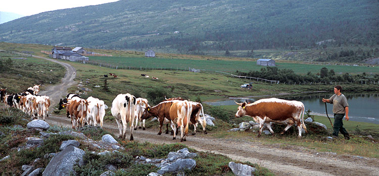Summer pasture farming – traditions for future | Norsk